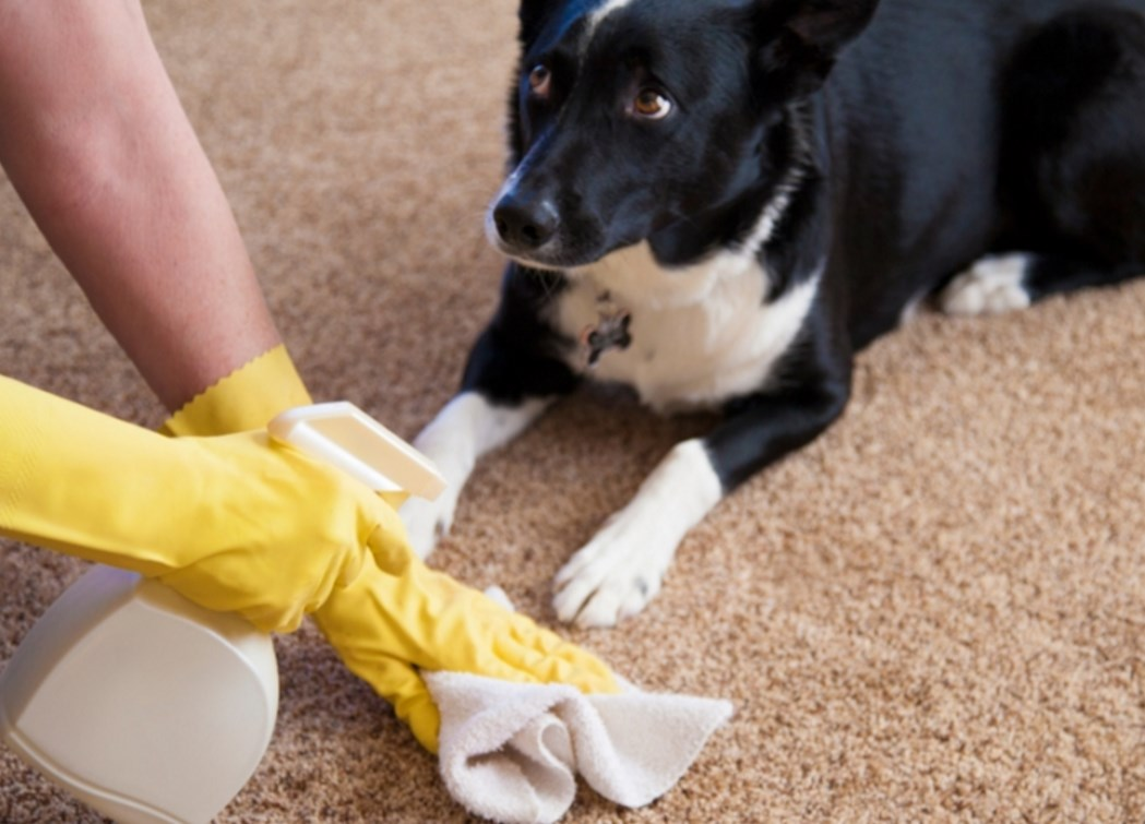 best carpet cleaner for dog urine odor
